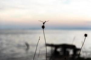 libellula su un ramoscello foto