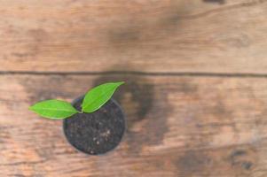 pianta in vaso sul tavolo foto