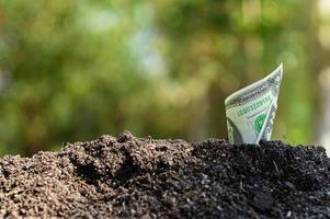 dollari che crescono dal concetto di suolo foto