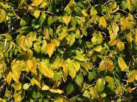 pianta verde in un giardino foto