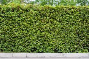 sfondo muro di foglie verdi foto