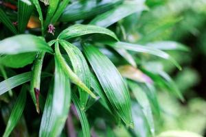 foglie nella stagione delle piogge foto