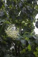 albero verde nel campo estivo foto