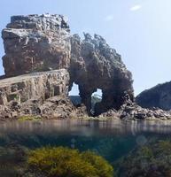 vista sotto e sopra l'acqua in una pozza di marea foto