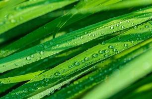 gocce di pioggia sul primo piano di foglie verdi foto