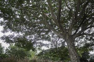 albero verde in un campo estivo foto
