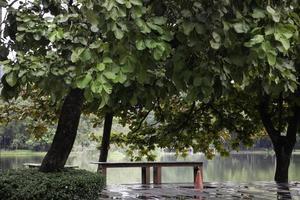 una panchina vicino a un lago foto