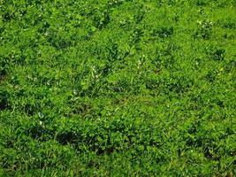 patch di prato o erba per lo sfondo o la trama foto