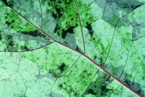 Close up di foglie texture di sfondo foto
