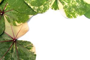 modello di foglie verdi su sfondo bianco foto
