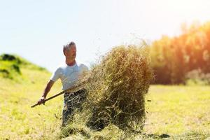 l'uomo contadino gira il fieno con una forca da fieno foto