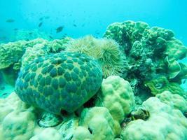 anemoni con pesce foto