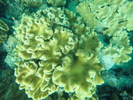 primo piano di una barriera corallina foto
