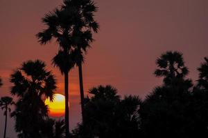 silhouette del tramonto della palma foto