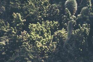 gruppo di cactus foto