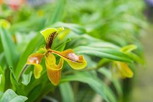 fiori di orchidea gialla foto