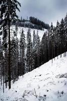foresta di abeti innevati foto