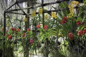 fattoria di orchidee colorate foto