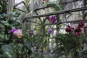 orchidee in una casa verde foto