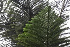 primo piano di foglie verdi degli alberi foto