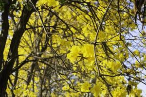 bellissimi fiori gialli estivi foto