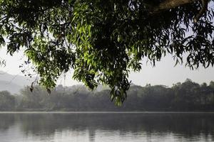 albero e lago foto