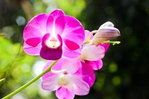 primo piano delle orchidee viola luminose foto