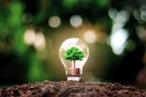 albero cresce in lampadine, risparmio energetico e concetti ambientali il giorno della terra foto