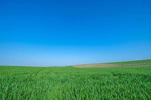 campo seminato verde con cielo blu foto