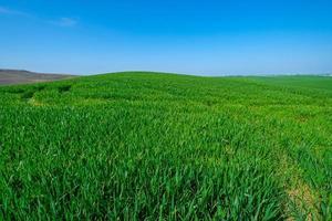 campo verde erboso foto