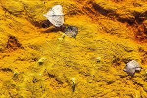 sfondo giallo natura astratta foto