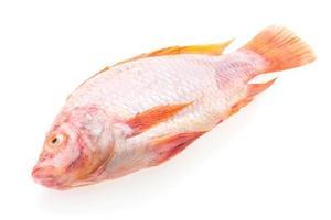 pesce fresco crudo foto