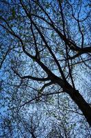 alberi contro il cielo foto