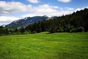 prato verde vicino al limite del bosco foto