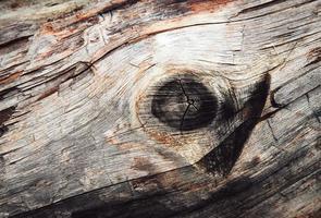 vecchio ramo di legno foto