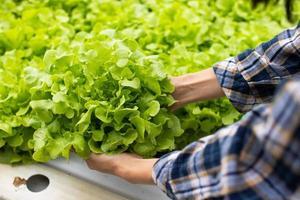 primo piano del proprietario dell'agricoltore che tiene le verdure idroponiche e controlla le piante organiche foto
