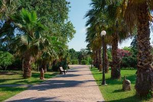 marciapiede tra le palme in un parco vuoto a sochi, russia foto
