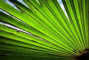 dettaglio di una palma verde foto