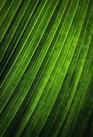dettaglio di una foglia verde foto