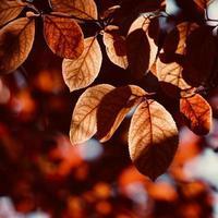 foglie di albero rosso nella stagione autunnale