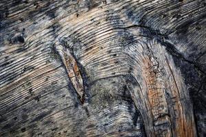 dettaglio del vecchio legno stagionato foto