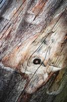 dettaglio di legno grezzo foto