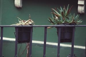 vasi di fiori in strada foto