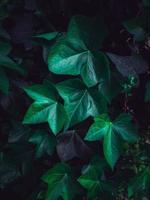 pianta verde foglie in un giardino nella stagione primaverile foto
