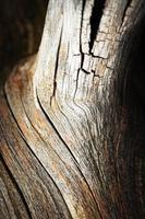 dettaglio del vecchio ramo secco foto