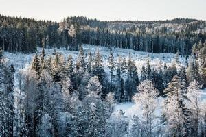 vista aerea su un bosco in inverno foto