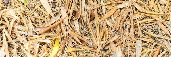 sfondo con texture di secche appassite cadute foglie di autunno foto