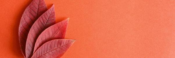 rosso autunno ciliegia foglie cadute su uno sfondo di carta rossa foto