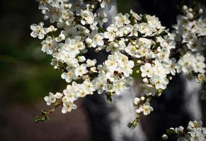 primo piano di fiori bianchi foto
