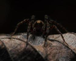 ragno su una foglia con sfondo nero foto